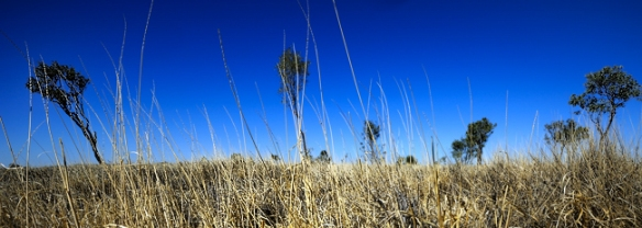 winton-grass-plains-australia-Queensland