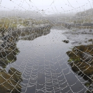 spiders web_14319