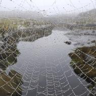 spiders web_14319